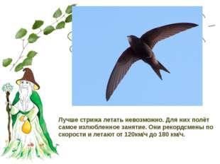 С какой скоростью летают стрижи? Лучше стрижа летать невозможно. Для них полё