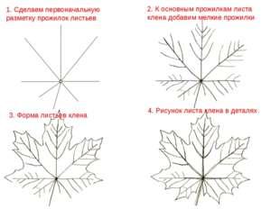 3. Форма листьев клена 2. К основным прожилкам листа клена добавим мелкие про