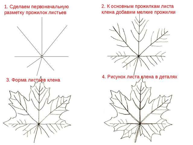 3. Форма листьев клена 2. К основным прожилкам листа клена добавим мелкие про...