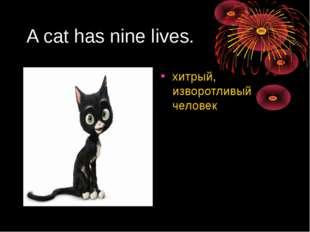 A cat has nine lives. хитрый, изворотливый человек