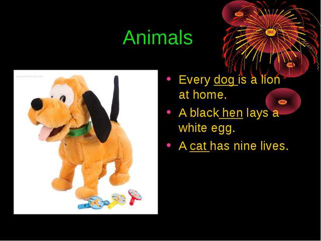 Animals Every dog is a lion at home. A black hen lays a white egg. A cat has...