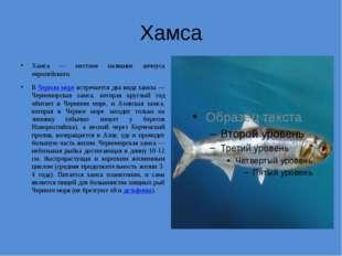 Хамса Хамса — местное название анчоуса европейского. ВЧерном море встречаетс