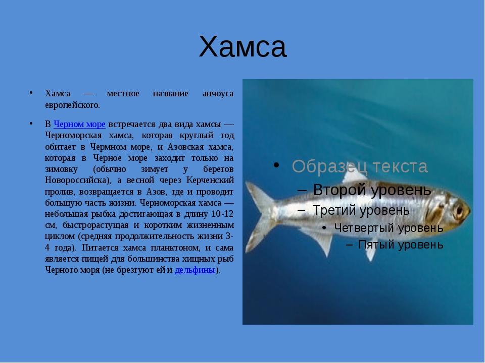 Хамса Хамса — местное название анчоуса европейского. ВЧерном море встречаетс...