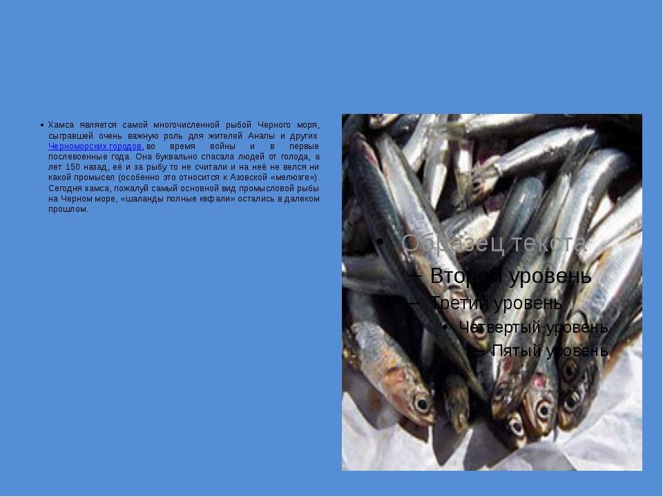 Хамса является самой многочисленной рыбой Черного моря, сыгравшей очень важн...
