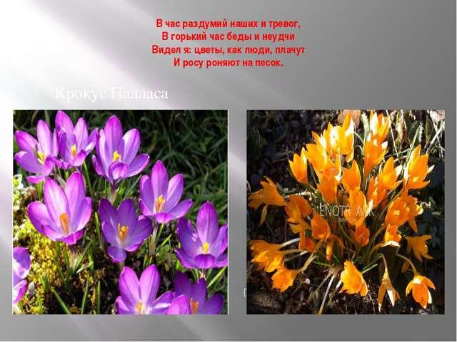 В час раздумий наших и тревог, В горький час беды и неудчи Видел я: цветы, ка...