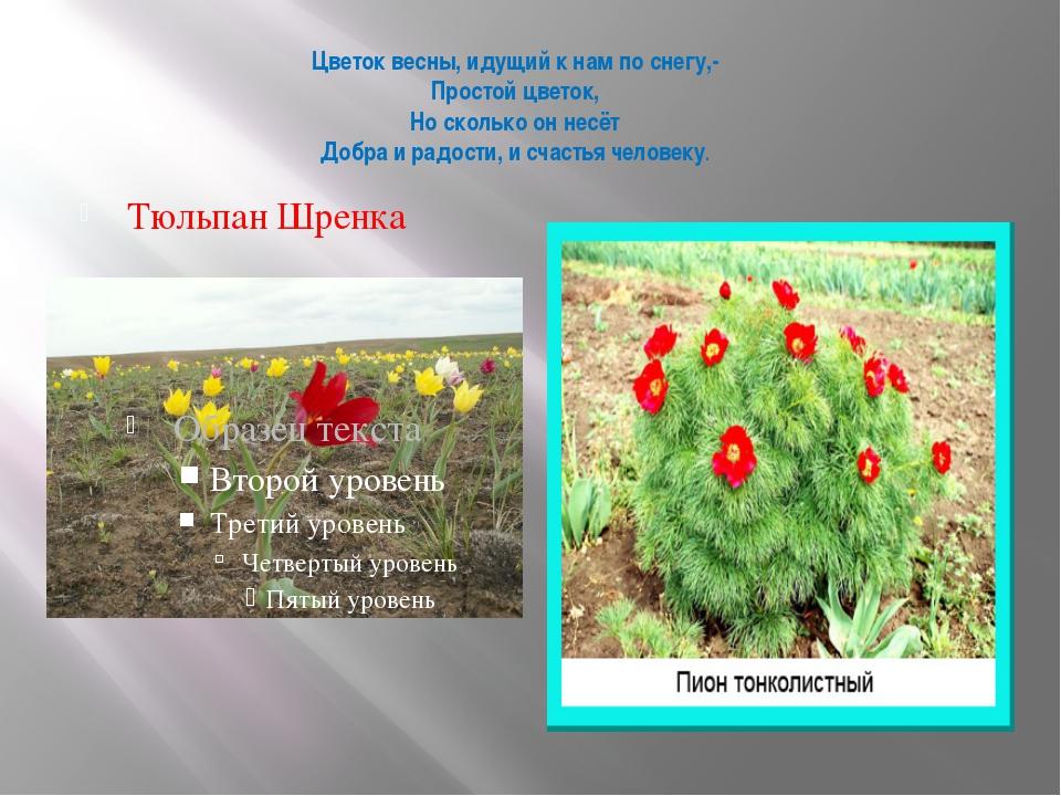 Цветок весны, идущий к нам по снегу,- Простой цветок, Но сколько он несёт Доб...