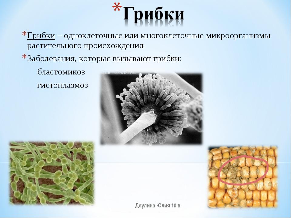 Грибки – одноклеточные или многоклеточные микроорганизмы растительного происх...
