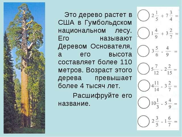 Это дерево растет в США в Гумбольдском национальном лесу. Его называют Дерев...