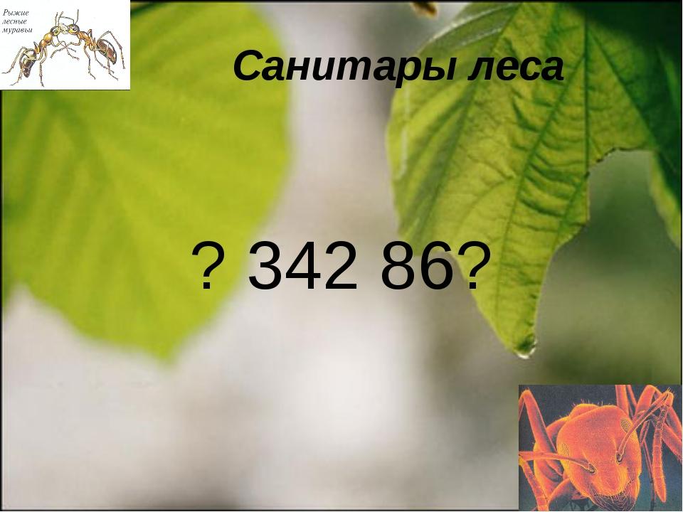 Санитары леса ? 342 86?