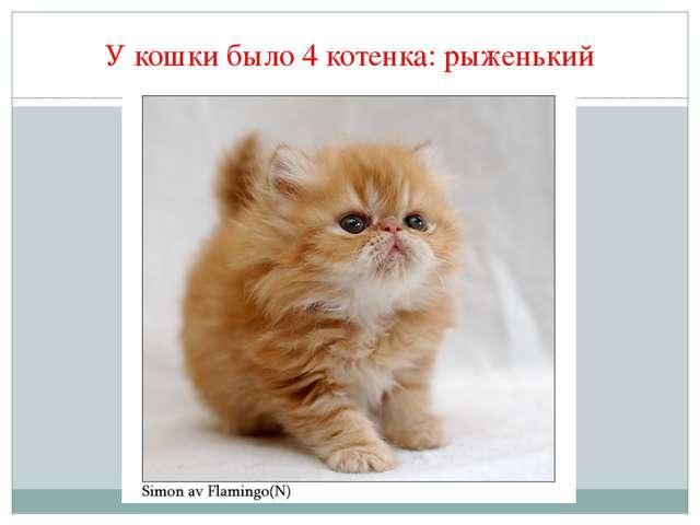 У кошки было 4 котенка: рыженький