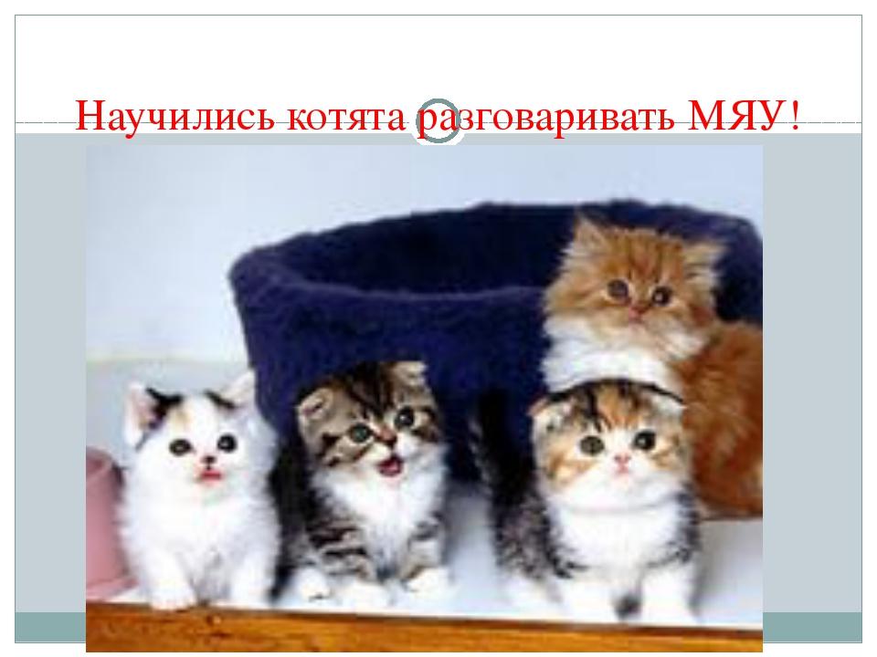 Научились котята разговаривать МЯУ!