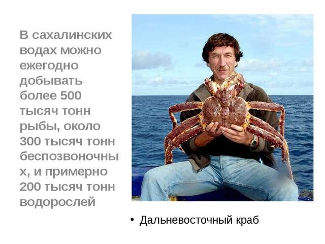 Дальневосточный краб В сахалинских водах можно ежегодно добывать более 500 т...