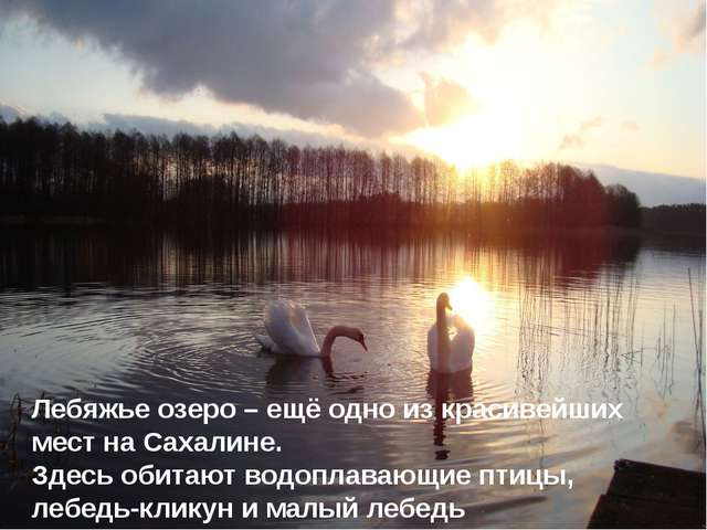 Лебяжье озеро – ещё одно из красивейших мест на Сахалине. Здесь обитают водоп...