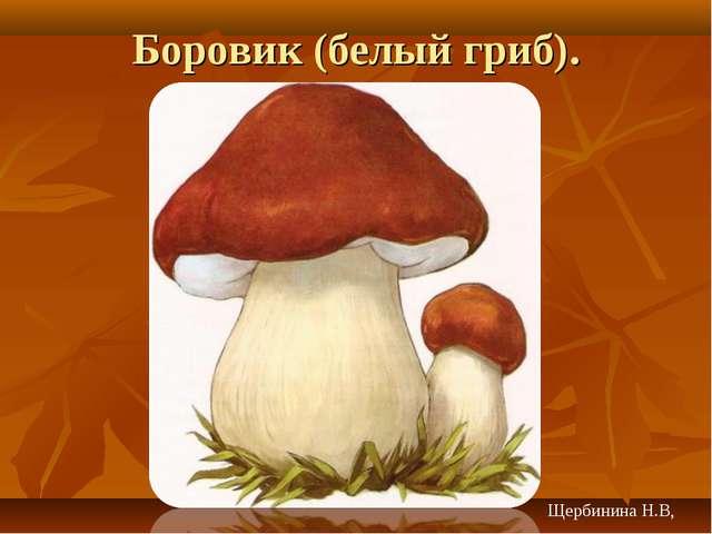 Боровик (белый гриб). Щербинина Н.В,