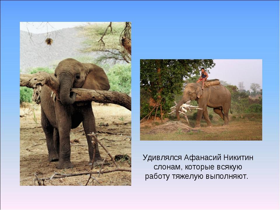 Удивлялся Афанасий Никитин слонам, которые всякую работу тяжелую выполняют.