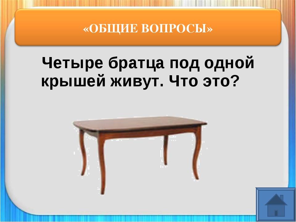 картинки загадка стол служат каменные иголки