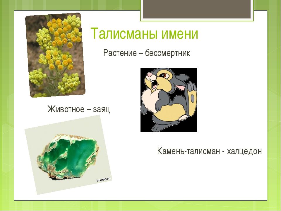 Растение – бессмертник Животное – заяц Камень-талисман - халцедон Талисманы...