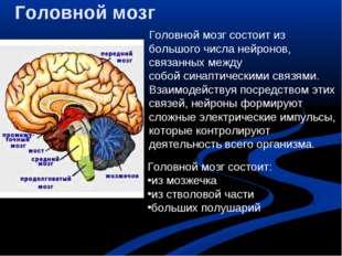 Головной мозг Головной мозг состоит из большого числанейронов, связанных меж