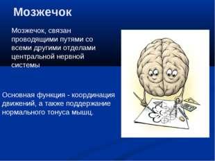Мозжечок Мозжечок, связан проводящими путями со всеми другими отделами центра