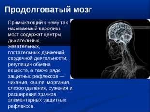 Продолговатый мозг Примыкающий к нему так называемый варолиев мост содержат ц