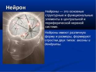 Нейрон Нейроны — это основные структурные и функциональные элементы в централ