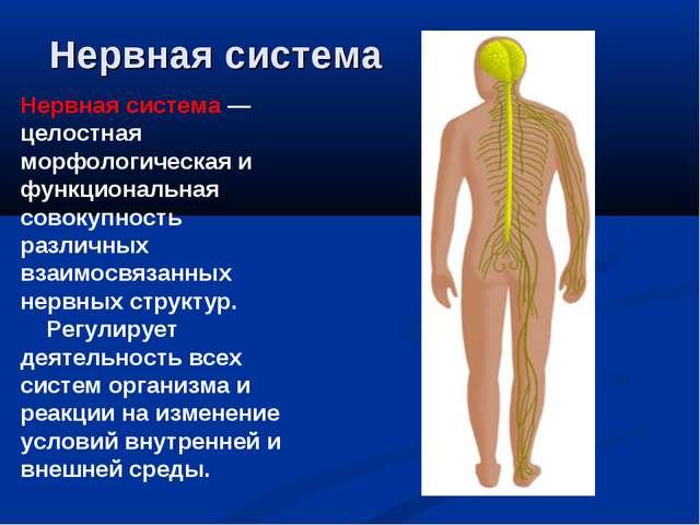 Нервная система Нервная система — целостная морфологическая и функциональная...