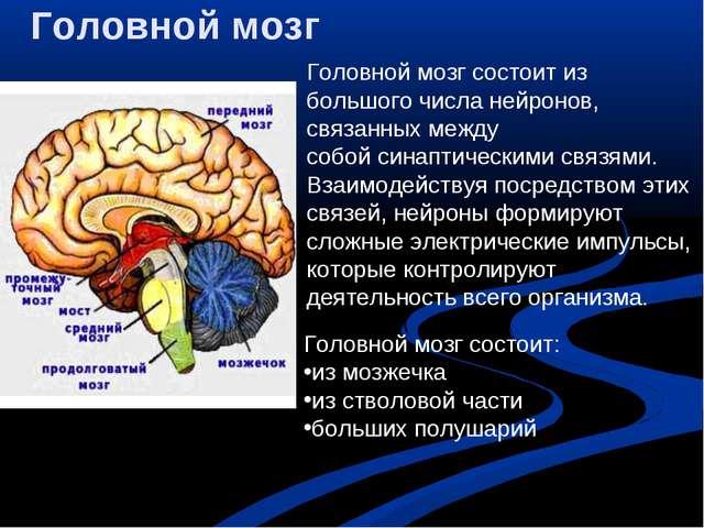 Головной мозг Головной мозг состоит из большого числанейронов, связанных меж...