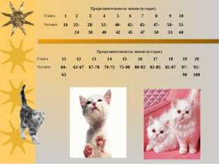Продолжительность жизни (в годах) Кошка 12345678910 Человек1622