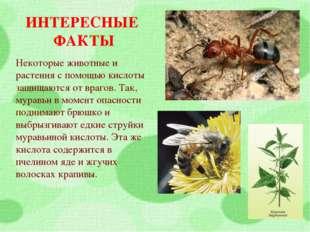 ИНТЕРЕСНЫЕ ФАКТЫ Некоторые животные и растения с помощью кислоты защищаются о