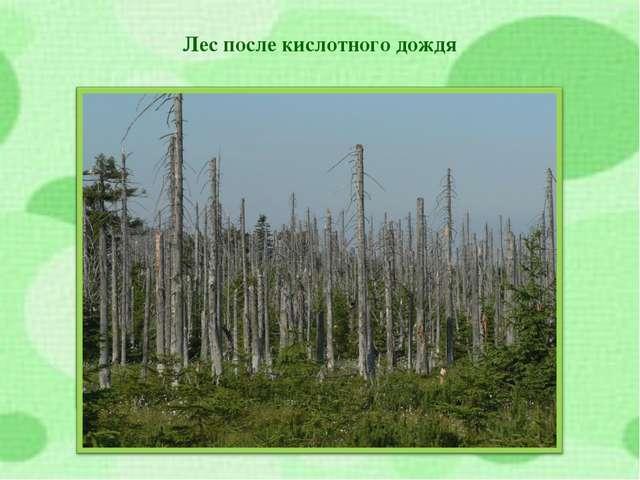 Лес после кислотного дождя