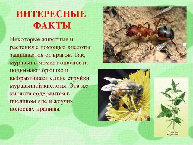 ИНТЕРЕСНЫЕ ФАКТЫ Некоторые животные и растения с помощью кислоты защищаются о...