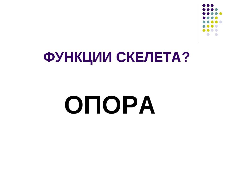 ФУНКЦИИ СКЕЛЕТА? ОПОРА
