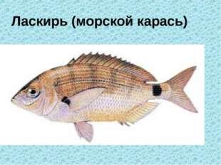 Ласкирь (морской карась)