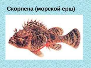 Скорпена (морской ерш)