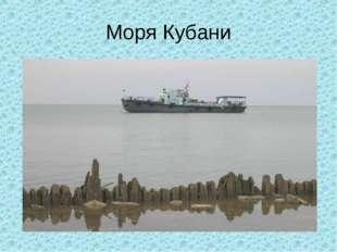 Моря Кубани