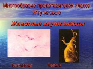 Многообразие представителей класса Жгутиковые Животные жгутиконосцы Трипанасо