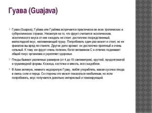 Гуава (Guajava) Гуава (Guajava), Гуйава или Гуайява встречается практически в