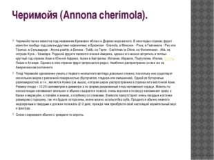 Черимойя (Annona cherimola). Черимойя также известна под названием Кремовое я