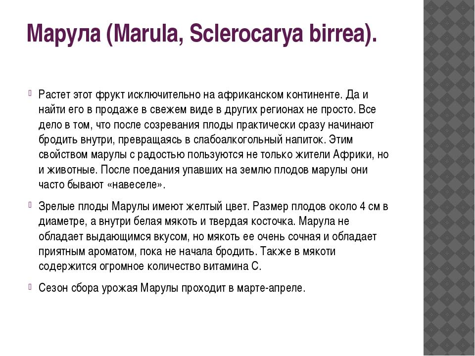 Марула (Marula, Sclerocarya birrea). Растет этот фрукт исключительно на африк...
