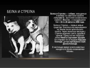 Белка и Стрелка— собаки, запущенные в космос на советском корабле «Спутник-5