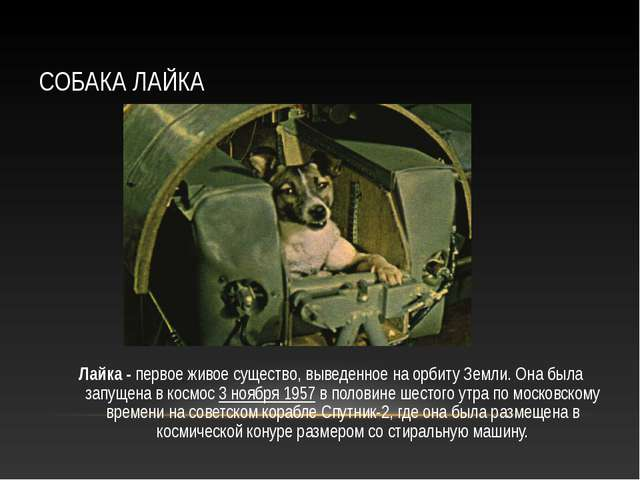 СОБАКА ЛАЙКА Лайка - первое живое существо, выведенное на орбиту Земли. Она б...
