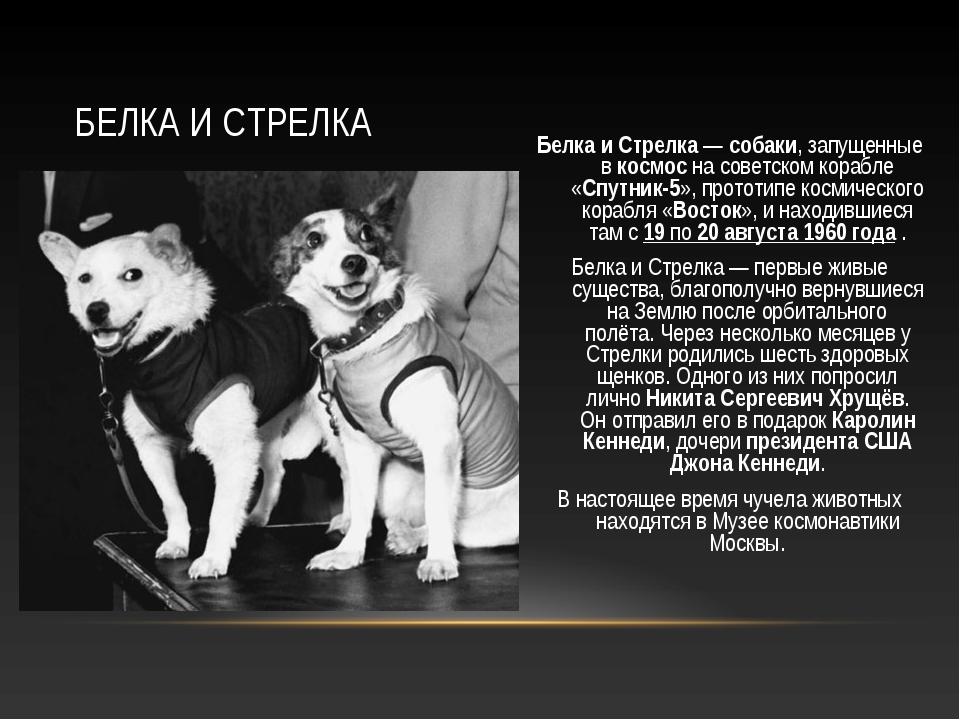 Белка и Стрелка— собаки, запущенные в космос на советском корабле «Спутник-5...