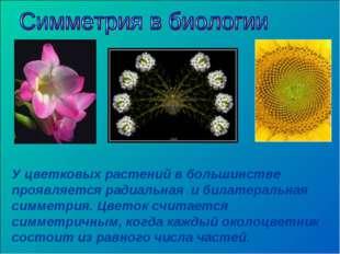У цветковых растений в большинстве проявляется радиальная и билатеральная сим
