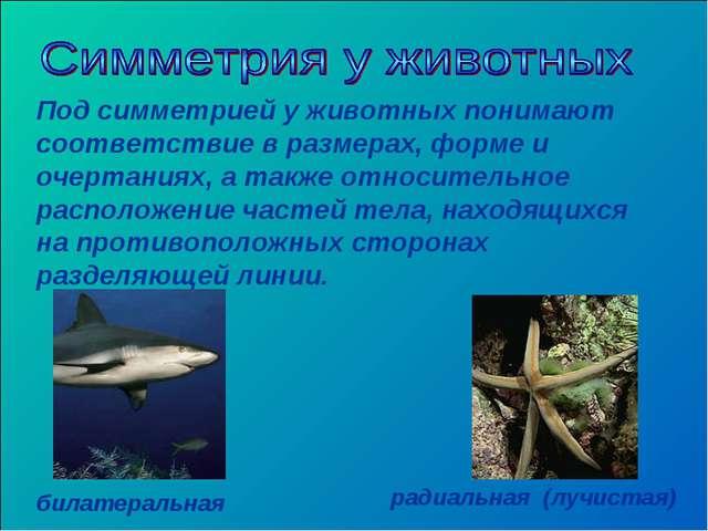 Под симметрией у животных понимают соответствие в размерах, форме и очертания...