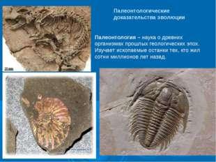 Палеонтологические доказательства эволюции Палеонтология – наука о древних ор