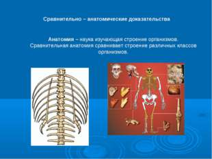 Сравнительно – анатомические доказательства Анатомия – наука изучающая строен