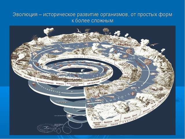 Эволюция – историческое развитие организмов, от простых форм к более сложным
