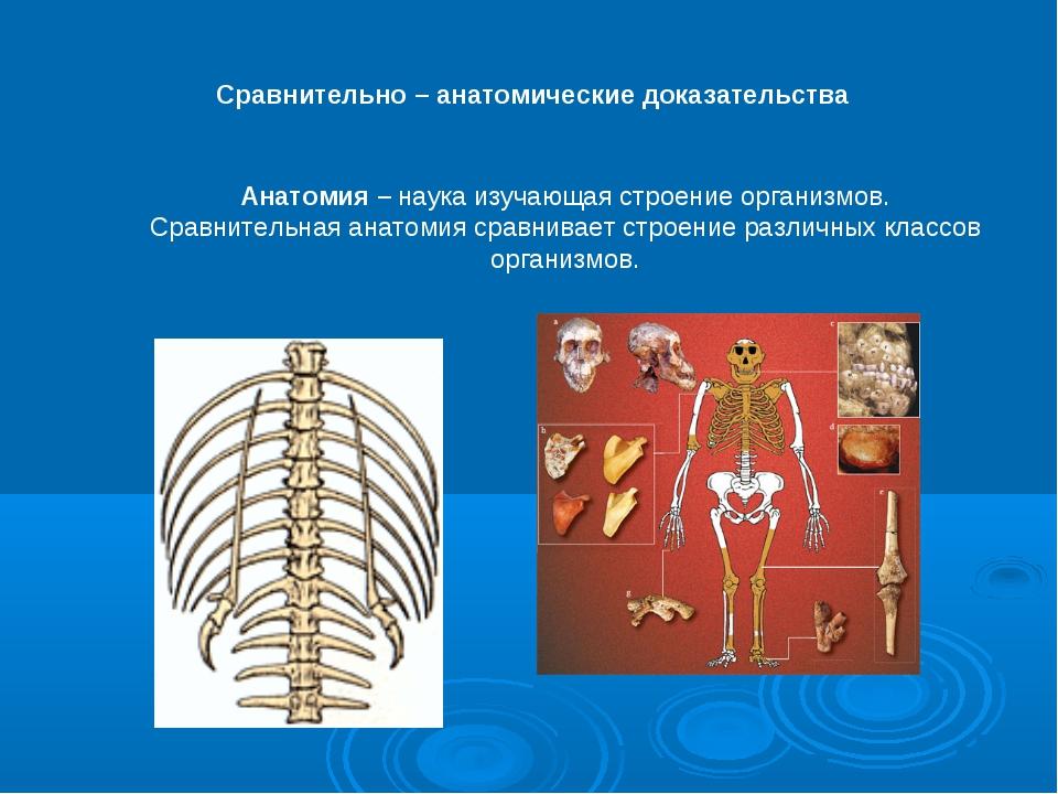 Сравнительно – анатомические доказательства Анатомия – наука изучающая строен...
