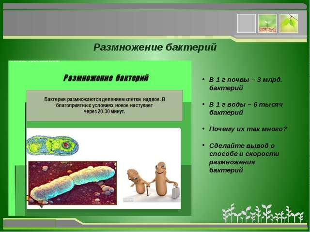 Размножение бактерий В 1 г почвы – 3 млрд. бактерий В 1 г воды – 6 тысяч бак...