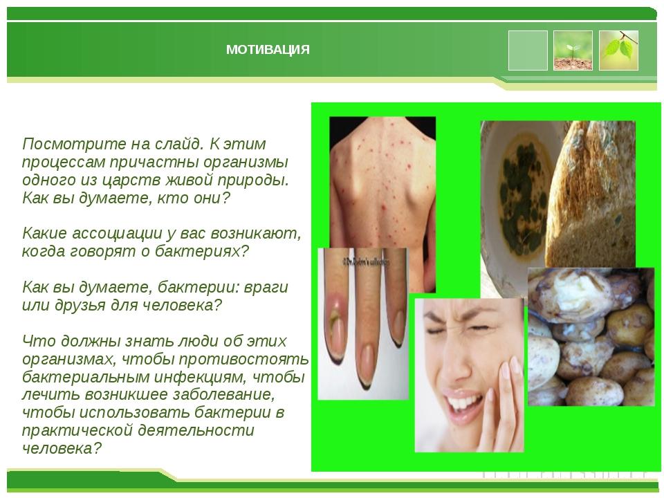 МОТИВАЦИЯ Посмотрите на слайд. К этим процессам причастны организмы одного из...